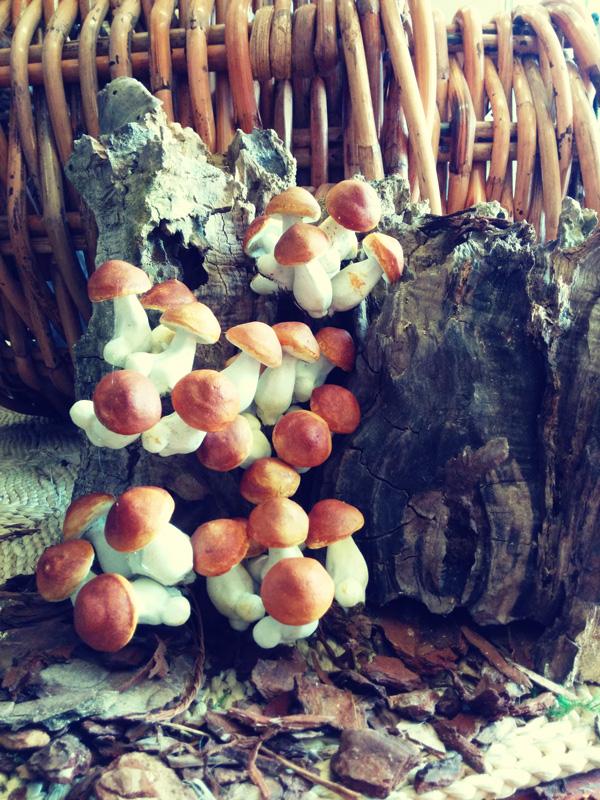 funghi-autunno-tronco