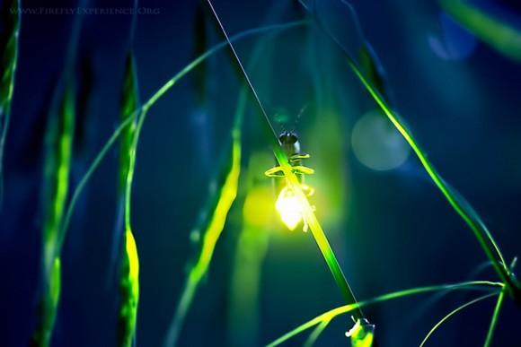 firefly-580x387