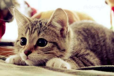 gatto-e1406715339299