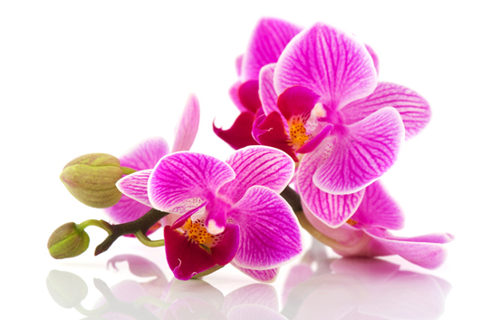 delivery-orchids.jpg