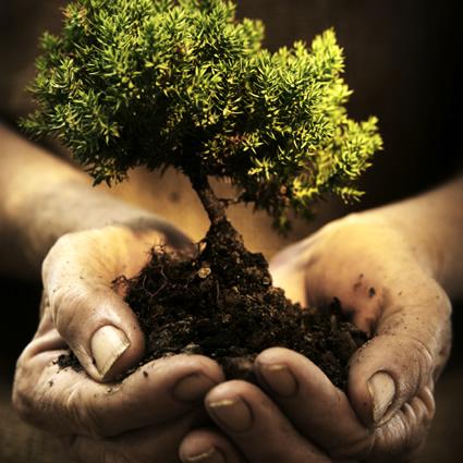 alberi_solari_energia_solare_albero_solare_foglie_energia_solare_alberi_solari_1