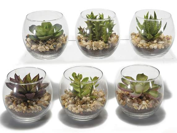 pianta-grassa-cactus-finti_543198