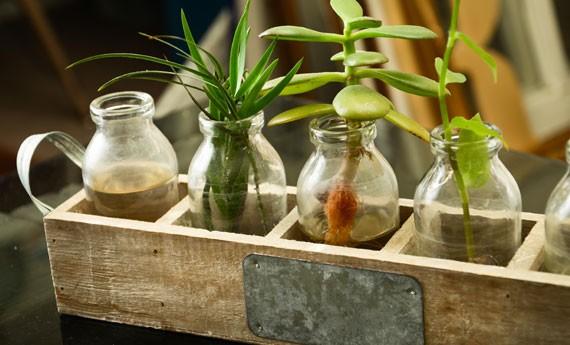 Idee regalo piante in barattolo creando idee - Piante regalo ...