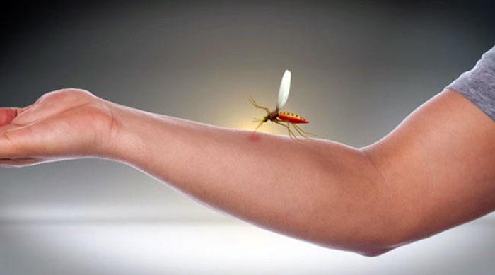 Oggi rilasciate di zanzare creando idee - Rimedi contro le zanzare in giardino ...
