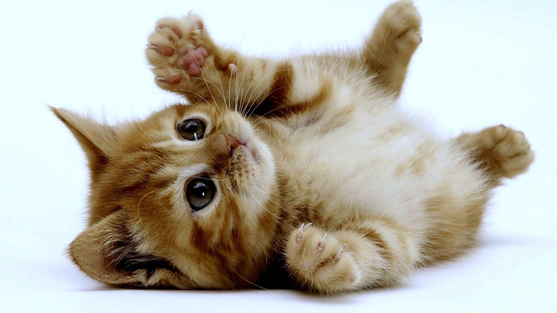 Il Buongiorno Con Un Gattino Creando Idee